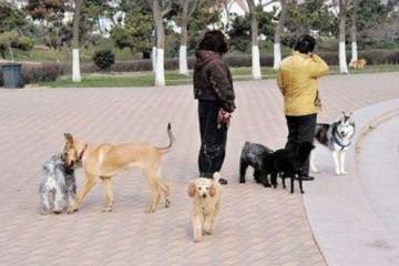 自家狗狗咬伤女街坊主人回绝补偿天太黑了狗狗没认出你